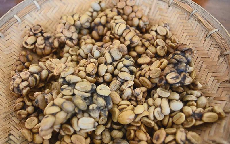 กาแฟขี้ชะมด สุดยอดกาแฟที่มีประวัติที่ไม่ธรรมดา