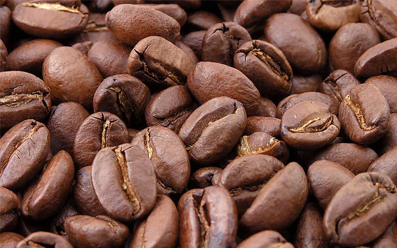 เมล็ดกาแฟ โรบัสต้า